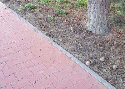 čistá zámková dlažba a strom